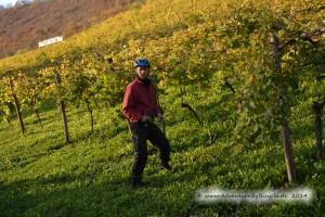 Saale-Unstrut Wein Region, Weintrauben gabs da nicht, aber es gab viel Löwenzahn